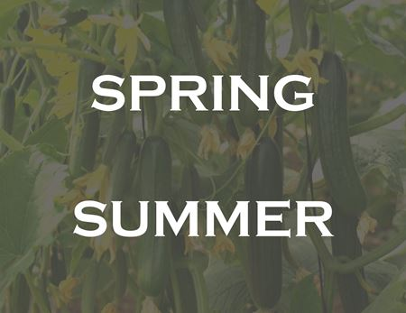 Picture for category Cucumber Summer Spring