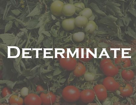 Picture for category Determinate